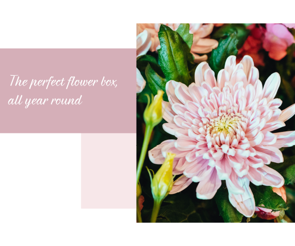 FLowers-perfect-letterbox-deliveries-subscription